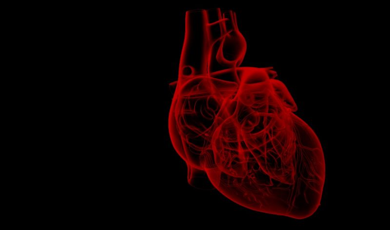 An image of a human heart on a black background